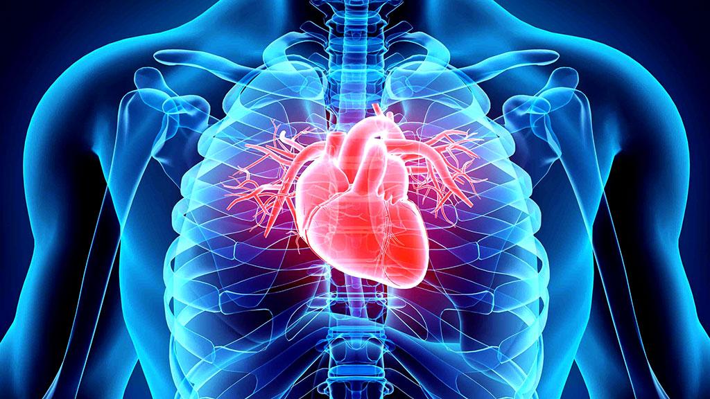 https://institutopegasus.com.br/site/saiba-um-pouco-mais-sobre-cardiologia/